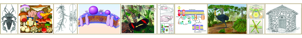 Collage of scientific illustrations